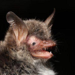 Profilbild von bat