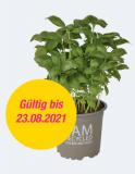 Gratis Bio-Basilikum bei Migros Do It Garden