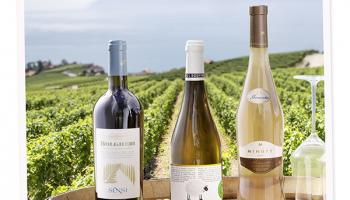 Manor Wine-Festival: Wo feine Weine entdeckt werden
