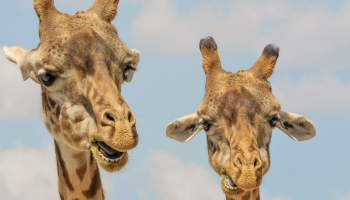 20% Gutschein für Eintritt in den Zoo Zürich, Tagestickets 1 Jahr gültig ab Kaufdatum