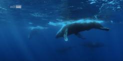 """""""Big Pacific"""" 4-teilige Dokumentation über den Pazifik gratis Streamen bei ZDF"""