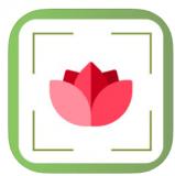 PlantDetect – Plant Identifier Pflanzenerkennung für iOS gratis