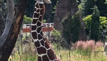 20% Gutschein für Eintritt in den Zoo Zürich für Tchibo Private Card Kunden (gratis)