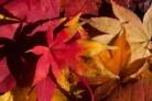 Herbst-Look Ausverkauf bei Dosenbach