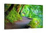 Fotos auf Leinwand im 70×70 Format für CHF 85.- statt CHF 98.-